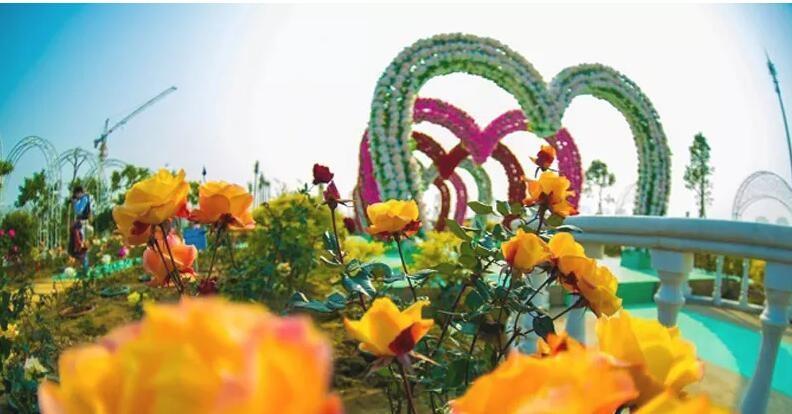 暑假遛娃玩水+萌宠+花海三合一!百万葵园(原价300)2大2小家庭套票现特价仅需99元